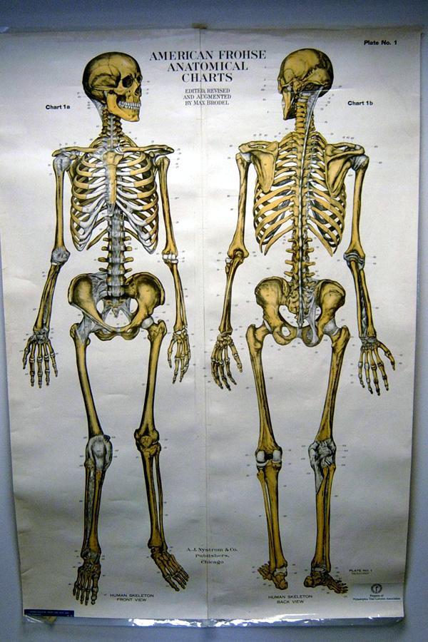 Anatomical Exhibit Rental